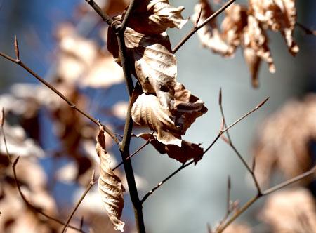 Alte Blätter