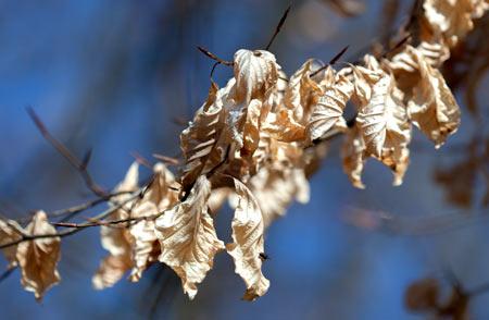 Alte Blätter aus dem Herbst 1/2